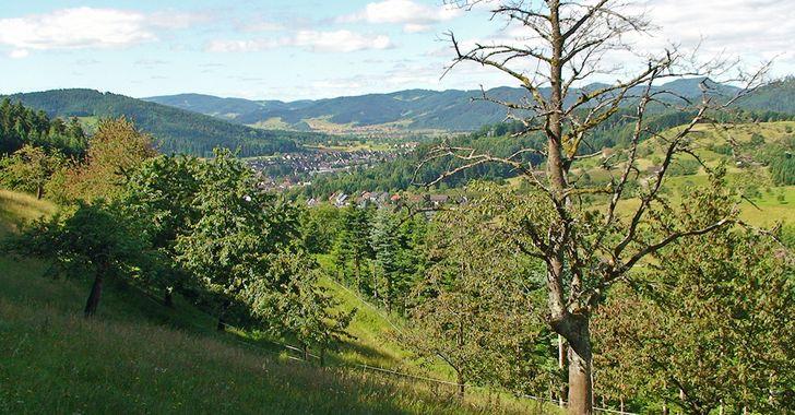 """Schwarzwald-Wanderung """"Hahn und Henne"""" - Blick ins Tal nach Unterharmersbach"""