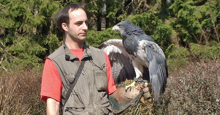 Falkner bei der Arbeit in der Greifvogelstation, auch als Wildgehege Hellenthal bekannt.