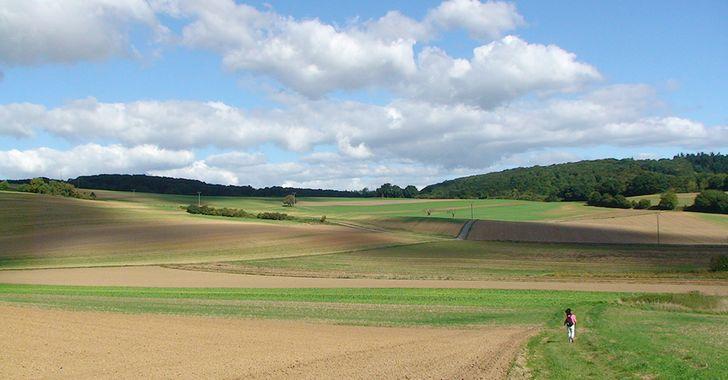 Traumpfad Kobener Burgpfad - Landschaft oberhalb von Kobern