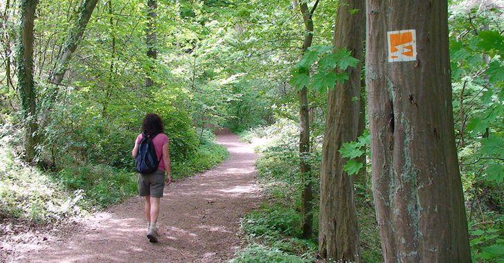 Geopfad Trasshöhlenweg – Waldweg im Brohltal vor der Teufelsschlucht